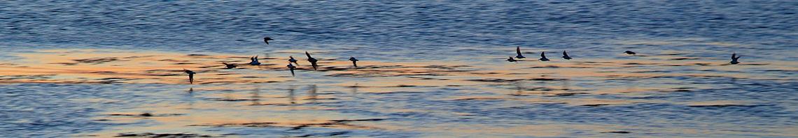 IE-EN.SeaBirdsWestCoast.32